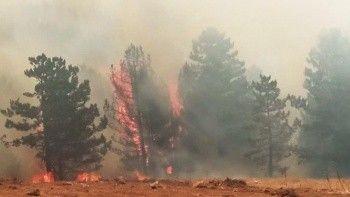 Muğla'da orman yangını: Köyceğiz'de 5 mahalle tahliye edildi