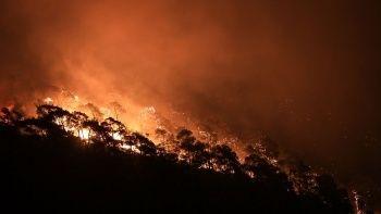 Orman Genel Müdür Yardımcısı Özkaya: Yanan ormanlar turizme açılmaz