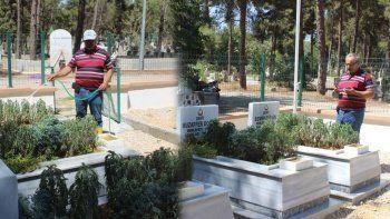 Şehit mezarlarına gönüllü bakım yapıyor, nöbet tutuyor: Ömrüm yettiği sürece bekçisi olacağım