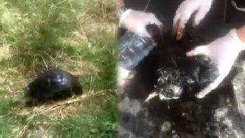 Üzerine zift dökülen kaplumbağayı hayvanseverler kurtardı
