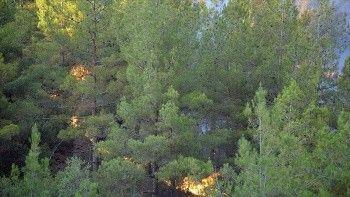 Yangın süs bitkisi ihracatını vurdu: 6 milyon dolar kayıp