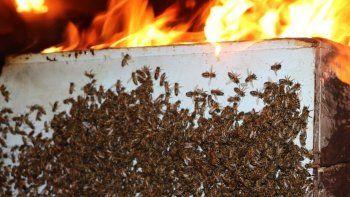 Yangında saniyeler içerisinde binlerce arı telef oldu