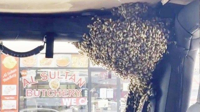 Bakkala gittiği esnada yüzlerce arı arabasını istila etti