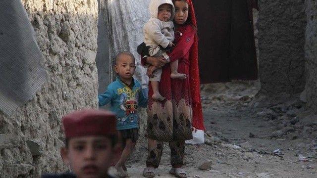 Skandal tazminat kararı: İngiltere hayvanlara Afganlardan daha fazla değer biçti