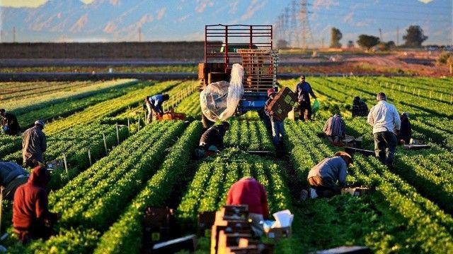 Tarımsal girdi fiyatları tüm zamanların rekorunu kırdı