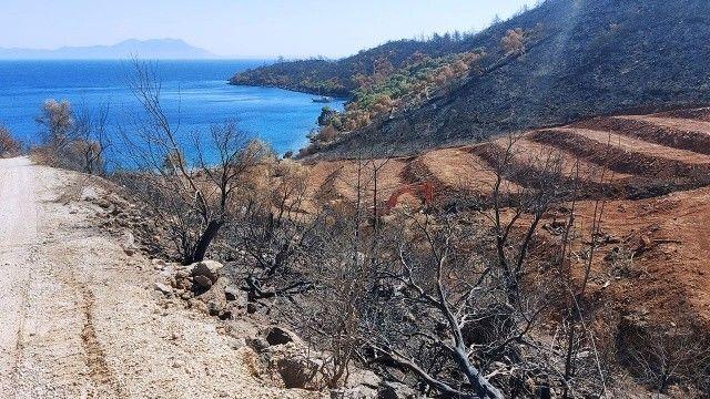 Yanan ormanlık alanlara 'inşaat yapılıyor' iddiası yalan çıktı
