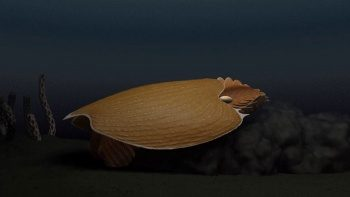 500 milyon yıl önce yaşayan canlının fosili kıyıya vurdu