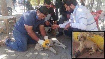 Bu kez de yavru köpeğe kalp masajı! Otomobil çarptı, vatandaşlar seferber oldu