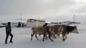 Erken gelen kış yaylacıların köye dönüşünü hızlandırdı