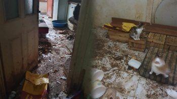 Evinden gelen kötü kokuyla anlaşıldı: Yaşlı kadının baktığı 50 kedi tedaviye alındı