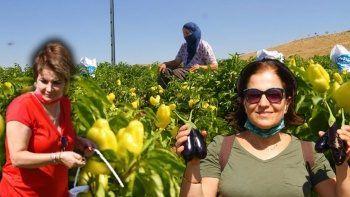 Fahiş fiyatlara kızdı, tarlasını halka açtı: Kendi sebzeni kendin topla