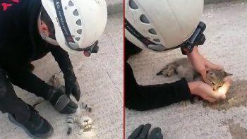 İtfaiyeden kalbi duran kediye kalp masajı: Zamanla yarıştı