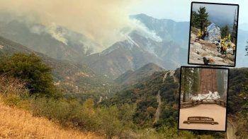 Kaliforniya'daki yangın felaketinde ağaçlar alüminyum folyo ile sarıldı