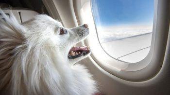 Köpeğiyle beraber uçmak için 'Business'ı kapattı