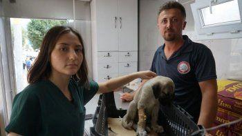 Selde ailesini kaybeden yavru köpek, iştahtan kesildi