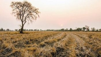 TARSİM'den üreticilere 214 milyon TL kuraklık ödemesi