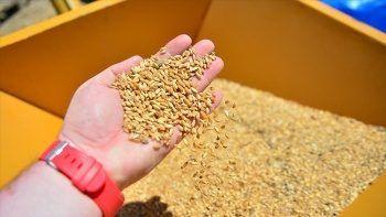 TMO, 260 bin ton arpa ithal edecek