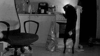 Yemek arayan köpek mutfağı ateşe verdi