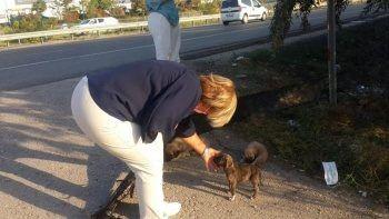 Yol kenarına bırakılan 50 yavru köpekten 20'si araçların altında telef oldu