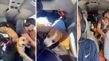 ABD'de uçakla köpekleri kurtardılar