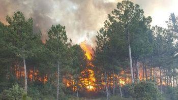 Antalya'da korkutan orman yangını! Müdahale ediliyor