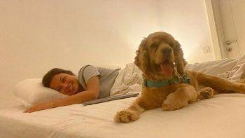 Antalya'da pitbull vahşeti! Köpeğe acı veda yürek burktu