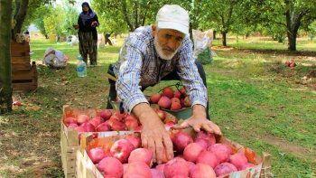 Dalında 1,5 lira olan elma manavda 6 lira