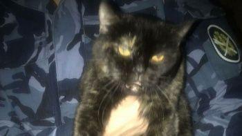 Hapishanede içinde uyuşturucu taşıyan kedi yakalandı