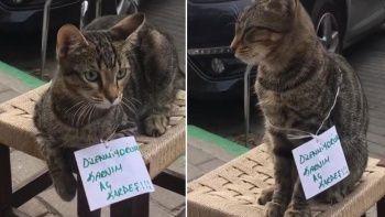 Karnı aç kedi farklı bir yöntem denedi