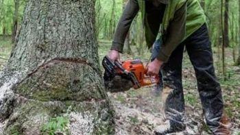Kestiği ağacın altında kalan adam hayatını kaybetti