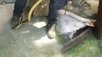 Kış uykusuna yatmayan yılan eve girdi! 2 metrelik yılanı gören evden kaçtı