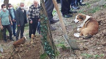 Köpeğin vefası! Sahibinin mezarından ayrılmadı