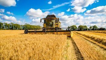 Küresel gıda fiyatlarında 10 yılın rekoru