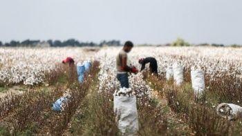 Pamukların altında kalan genç işçi hayatını kaybetti
