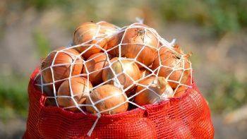 Üretici-market makası 3,5 kat açıldı: Kuru soğan zirveye oturdu