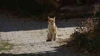Yırtıcı hayvanların parçalaması için ormana terk edilen kedilere köylüler sahip çıktı