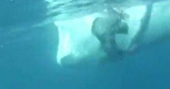 Dev balina dalgıcı teğet geçti: O anlar kamerada