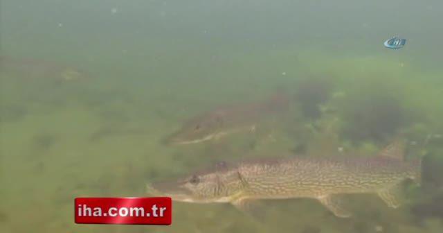 Rusya Devlet Başkanı Putin balık avında