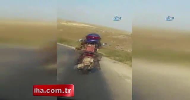 Motosiklette köpek ile tehlikeli yolculuk