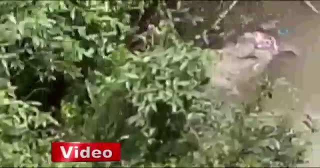 Arakan'dan korkunç görüntü