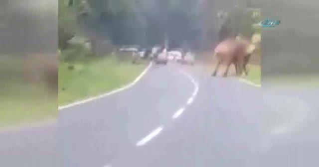 Fil adamı böyle öldürdü
