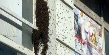 Bağcılar'da arı istilası