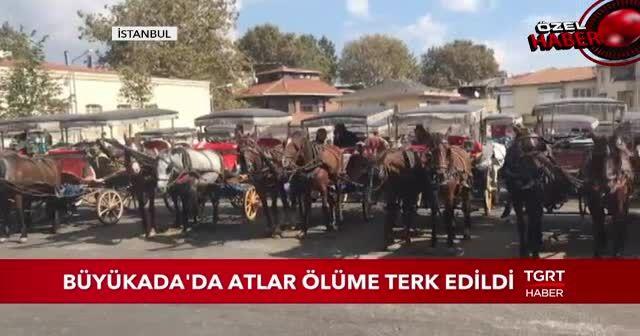 Büyükada'da at skandalı