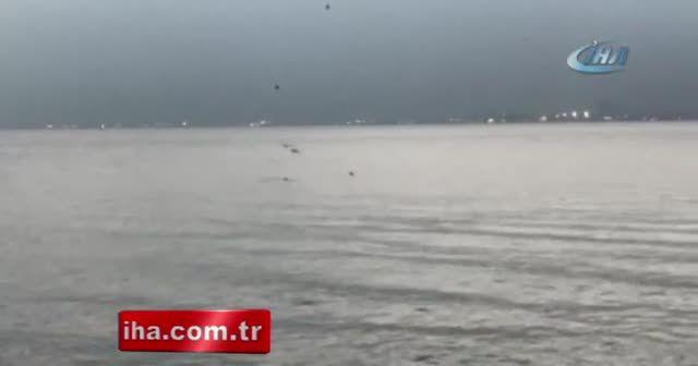 Sevimli yunuslar İstanbul Boğaz'ında görsel şölen sundu