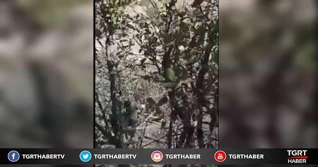 PKK'nın kritik isminin yakalanma anı kamerada!