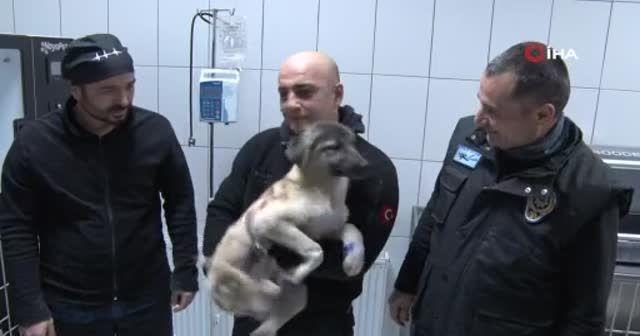 Donan gölde buzları kırarak kurtardığı yavru köpeği sahiplendi