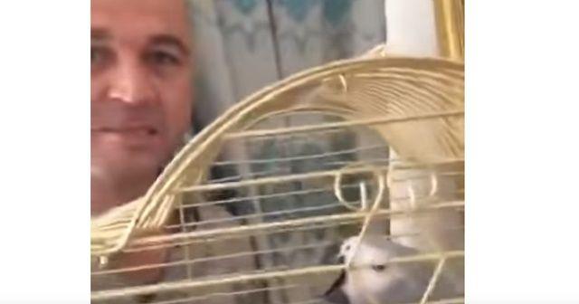 Masterchef Murat'ın papağanına işkence yaptığının kanıtı