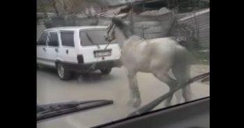 Vicdansız sürücü atını aracının arkasına bağlayıp ana yolda koşturdu
