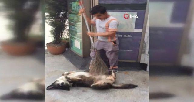 Temizlik işçisinden köpeğe masaj