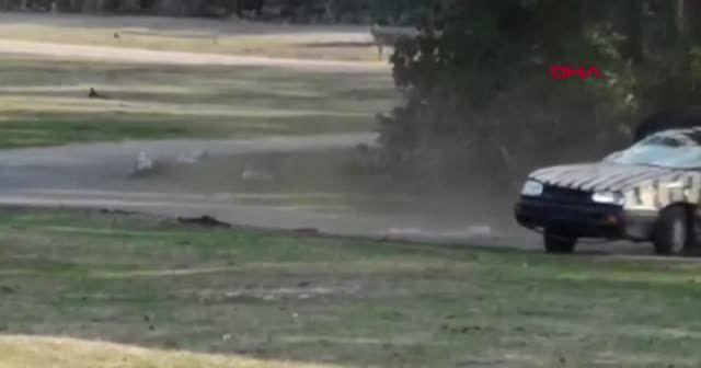 Gergedan, eğitmenin otomobilini hurdaya çevirdi
